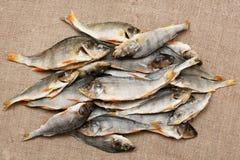 Hög av den torkade fisken Royaltyfri Bild