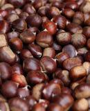 Hög av frukter av sativa för Castanea som samlas i trät i höst Royaltyfria Foton