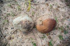 Hög av gamla kokosnötter Royaltyfria Foton