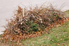 Hög av gamla torra trädfilialer för snitt med höstnedgångsidor på dem, förlorat avskrädeavfall på jordning royaltyfri foto