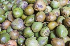 Hög av gröna (mjuka) kokosnötter Fotografering för Bildbyråer