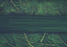 Hög av gröna nya sticka nässlasidor med kopieringsutrymme Kan använda som baner Fotografering för Bildbyråer