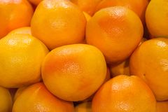 Hög av grapefrukter i lagret Royaltyfria Foton