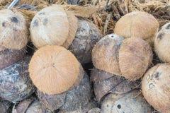 Hög av kasserad kokosnötskalbakgrund Royaltyfria Bilder