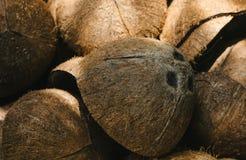 Hög av kasserade kokosnötskal Royaltyfria Foton