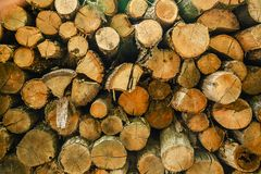 Hög av klippt trädträ som abstrakt naturlig bakgrund Fotografering för Bildbyråer