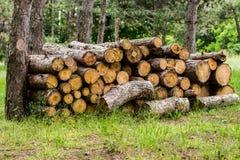 Hög av klippta träd Arkivfoto