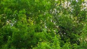 Hög av kull spridd på grönt gräs i skog lager videofilmer