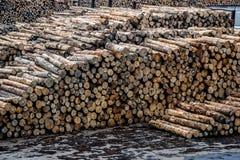 Hög av loggade trädstammar Arkivfoto