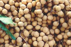Hög av Longanfrukt för försäljning i gatamarknaden, Thailand, slut upp arkivbilder