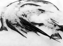 Hög av makrillfisken i is som är till salu på fiskmarknaden arkivbilder