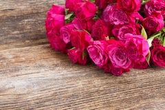 Hög av malvafärgade rosor Arkivfoto