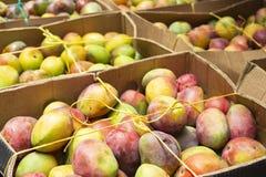 hög av mango i den colombianska marknaden arkivfoton