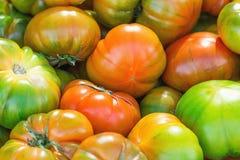 Hög av mogna organiska mångfärgade Raf Tomatoes på bondemarknaden vibrerande ljusa färger Vitaminer sunda Superfoods bantar Royaltyfria Foton