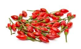 Hög av mogna röda peppar Piri-Piri Fotografering för Bildbyråer