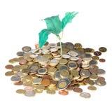 Hög av mynt med pengarträdet som isoleras på en vit bakgrund Royaltyfri Foto