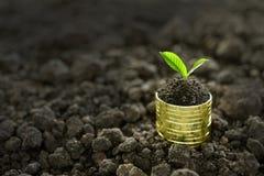 Hög av mynt med växten överst Arkivbild
