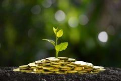 Hög av mynt med växten överst för affären, besparing, tillväxt, ekonomiskt begrepp Royaltyfria Bilder