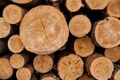 Hög av numrerade avverkade barrträd med många microcracks Fotografering för Bildbyråer