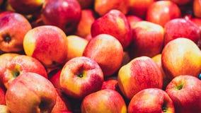 Hög av ny organisk äpplefrukt royaltyfria foton