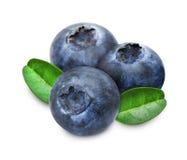 Hög av nya blåbär med sidor royaltyfri fotografi