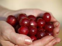 Hög av nya Cherry Fruits Arkivfoto