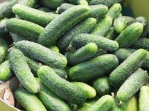 Hög av nya gröna gurkor Royaltyfria Foton