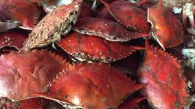 Hög av nya kokta krabbor stock video