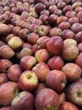 Hög av nya organiska bästa röda äpplen Arkivbild