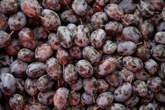 Hög av nya organiska purpura Damsonplommoner Royaltyfria Foton