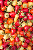 Hög av organisk paprika Royaltyfria Bilder