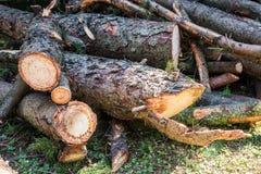 Hög av Pien Tree Logs Fotografering för Bildbyråer