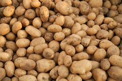 Hög av potatisar Fotografering för Bildbyråer