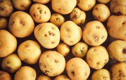 Hög av potatisar på säckvävsäcken Arkivbild