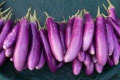 Hög av purpurfärgad sagaaubergine Royaltyfria Bilder