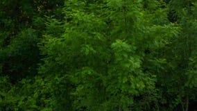 Hög av racka ner på spridd på grönt gräs i skog stock video