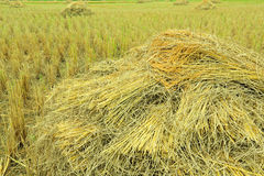 Hög av rice Royaltyfri Foto