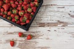 Hög av saftiga mogna organiska jordgubbar i en träask, spjällåda, på en vit bakgrund royaltyfri fotografi