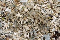 Hög av små bosatta krabbor arkivbild