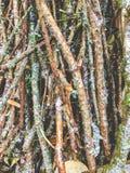 Hög av småskog som täckas med snö Royaltyfri Bild