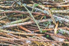 Hög av småskog som täckas med snö Royaltyfria Foton