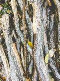 Hög av småskog som täckas med snö Fotografering för Bildbyråer