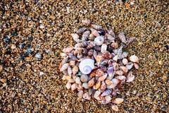 Hög av snäckskal på stranden royaltyfri foto