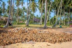 Hög av snittet och hela kokosnötter Arkivfoton