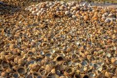 Hög av snittet och hela kokosnötter Royaltyfri Fotografi
