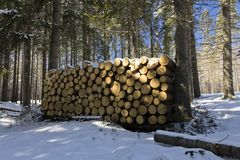 Hög av stycken av trä i skog i vinter i poli Royaltyfri Bild