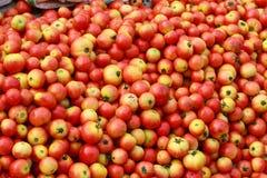 Hög av tomaten i en grönsakmarknad royaltyfri bild