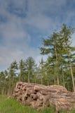 Hög av trä Arkivbild