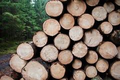 Hög av trä Royaltyfria Foton