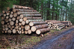 Hög av trä Royaltyfri Fotografi